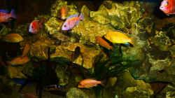 Aquarium African sun
