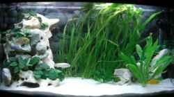 Aquarium Becken 6807