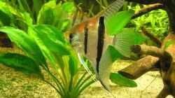 Besatz im Aquarium Becken 6853