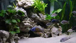 Dekoration im Aquarium Becken 692