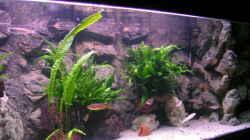Aquarium Becken 713