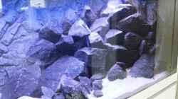 Aquarium Rückkehrer als Malawi