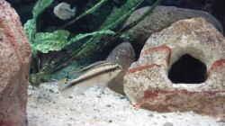 Besatz im Aquarium Becken 73
