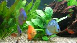 Dekoration im Aquarium Becken 7323