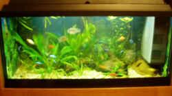 Aquarium Becken 733