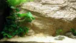 Dekoration im Aquarium Becken 7333