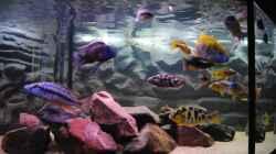 Aquarium Becken 7395