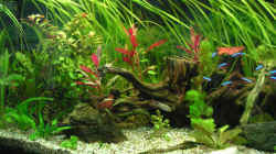 Dekoration im Aquarium Becken 7396
