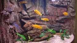 Pflanzen im Aquarium Becken 7438