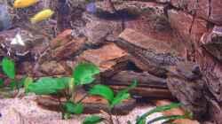 Aquarium Becken 7438