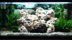Pflanzen im Aquarium Becken 7460