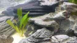 Pflanzen im Aquarium Becken 7487