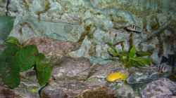 Dekoration im Aquarium Becken 7492