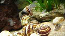 Dekoration im Aquarium Becken 7503