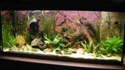 Aquarium einrichten mit 240 Liter mit Back To Nature Slim Line