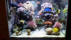 Aquarium Neues Becken