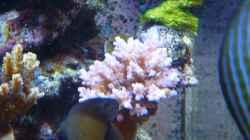 Besatz im Aquarium Neues Becken