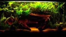 Aquarium Becken 791