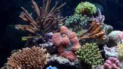 Dekoration im Aquarium Becken 7965
