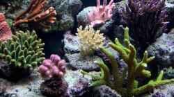 Besatz im Aquarium Becken 7965