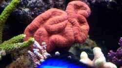 Technik im Aquarium Becken 7965