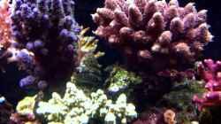 Pflanzen im Aquarium Becken 7965