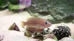 Besatz im Aquarium Becken 8404