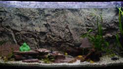 Aquarium Becken 8447