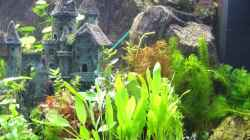 Dekoration im Aquarium Becken 8694