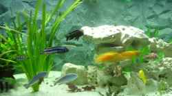 Dekoration im Aquarium Becken 8753
