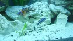 Besatz im Aquarium Becken 8753