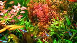 Aquarium (nur noch als Beispiel)