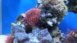 Pflanzen im Aquarium Becken 8816