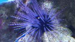 Besatz im Aquarium Becken 8816