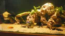 Besatz im Aquarium Becken 9