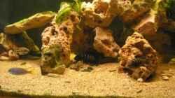 Pflanzen im Aquarium Becken 9