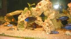 Aquarium Becken 9