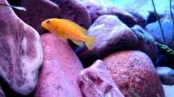 Aquarium 375L Mbuna - nur noch als Beispiel -