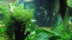 Dekoration im Aquarium Becken 9396