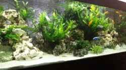 Dekoration im Aquarium Becken 9459