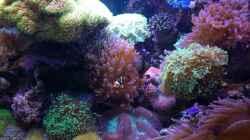 Aquarium Holger's Meerwasser Aquarium