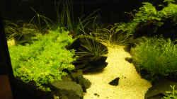 Pflanzen im Aquarium Becken 9614