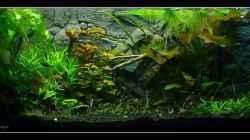 Aquarium Mein Großes
