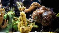 Aquarium Becken 9800