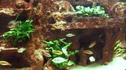 Aquarium Becken 991