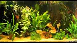 Aquarium Becken 9937