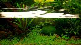 aquarium-von-jo-the-fish-becken-10912_
