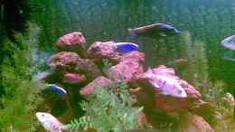 aquarium-von-dimmifan-becken-11005_links