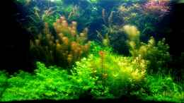 aquarium-von-amazonas-farbenfrohes-steilufer_