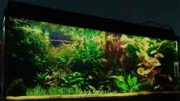 aquarium-von-zebraschneggla-gardeners-pleasure_...4...